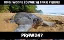 Najpiękniejsze żółwie ever!