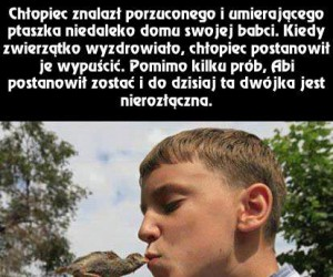 Ptaszek o imieniu Abi