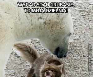 Nie fikaj do niedźwiedzia