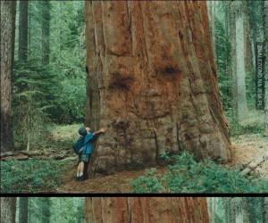 Drzewko lubi dzieci