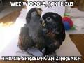 Bardzo głodna papuga