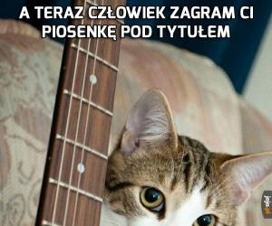 Wielki hit wśród kotów