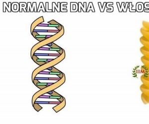 Normalne DNA vs włoskie DNA