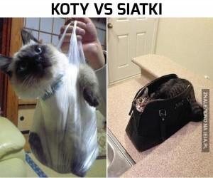 Koty vs siatki cz.2