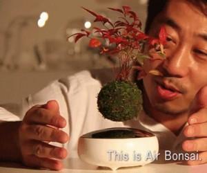 Lewitujące drzewko bonsai