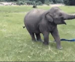 Słonik chyba znalazł swoje powołanie