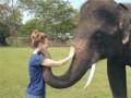 Pożegnanie ze słoniem