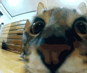 Kot w zwolnionym tempie