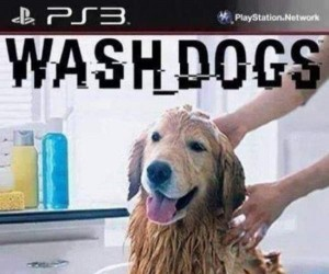 Wash_Dogs