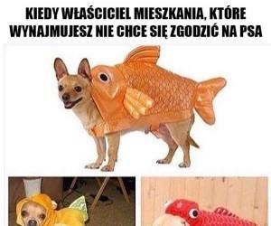 Ale na rybki to już tak