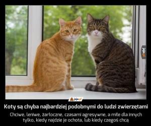 Koty są chyba najbardziej podobnymi do ludzi zwierzętami