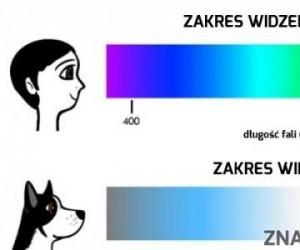 Psy nie są ślepe
