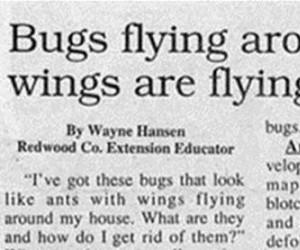 Latające robale ze skrzydłami to latające robale