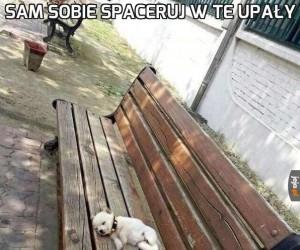 Zostaw biednego psa