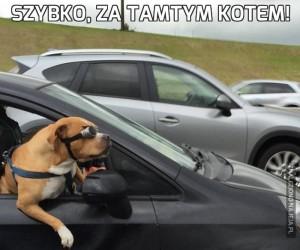 Szybko, za tamtym kotem!