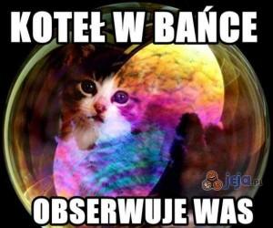 Koteł w bańce
