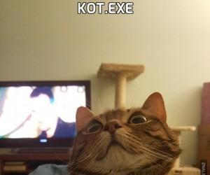 Kot.exe