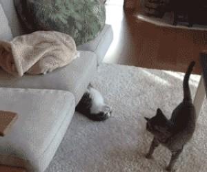 No chodź tu do mnie