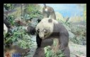 Wypchana panda