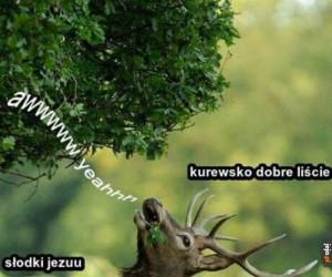 Takie tam z lasu