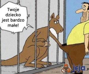 Wredna kangurzyca