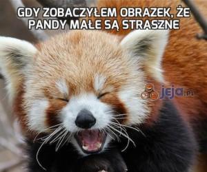 Gdy zobaczyłem obrazek, że pandy małe są straszne