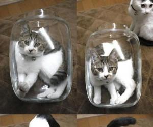 Koty w słoiku