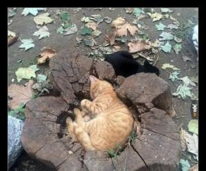 Kiedy jesteś magicznym, leśnym kotkiem