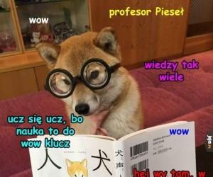 Pieseł wow profesor