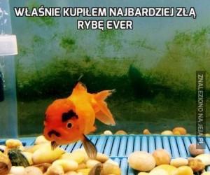 Właśnie kupiłem najbardziej złą rybę ever