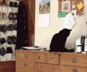 Koty to dupki