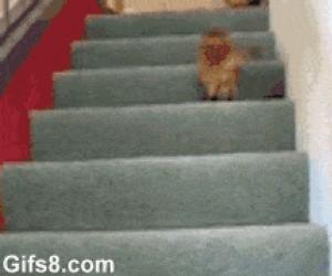 Koteł nie wie co zrobić