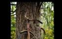 Rower z historią