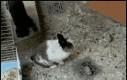 Chodź się przytulić do królisia!