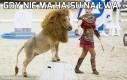 Gdy nie ma hajsu na lwa...