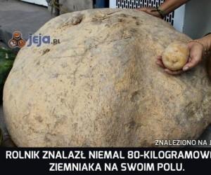 O bulwa, ale ziemniak!
