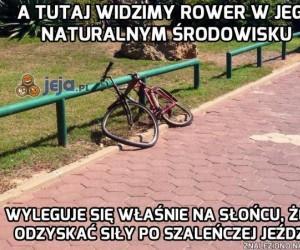 Proszę Państwa, rower!