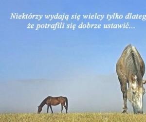 Tak jak ten koń
