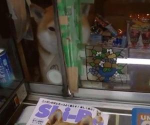 Witam w kiosku pieseła, w czym mogę pomóc?