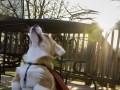 Pies supermana