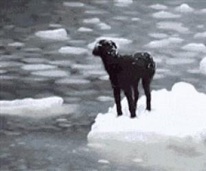 Pies uratowany z kry lodowej przez przypadkowych marynarzy