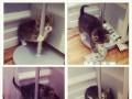 Słodki kociak na rurze