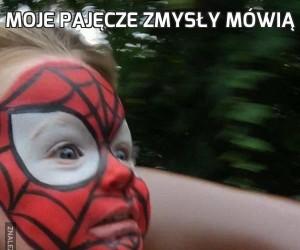Moje pajęcze zmysły mówią