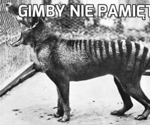 Gimby nie pamiętajo