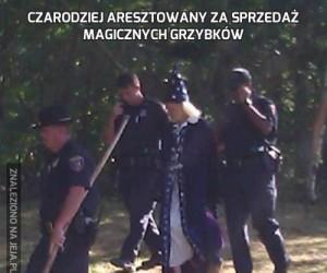 Czarodziej aresztowany za sprzedaż magicznych grzybków