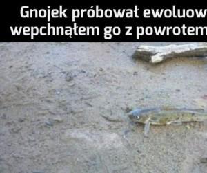 Nie ma takiego ewoluowania