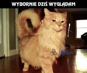 Dystyngowany kot