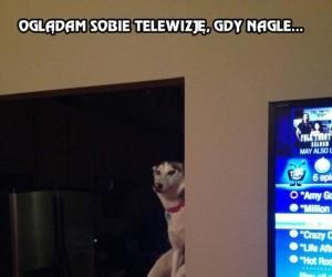 Oglądam sobie telewizję, gdy nagle...