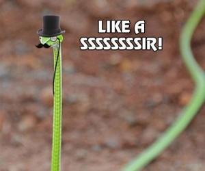 Like a ssssssssir!