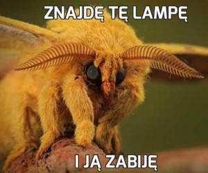 Znajdę tę lampę